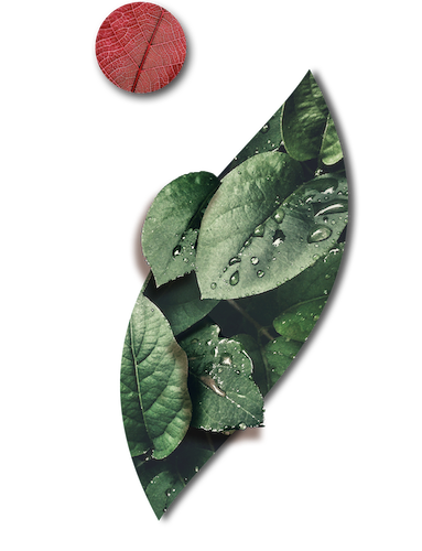 Plant extracts | Abel Nutraceuticals