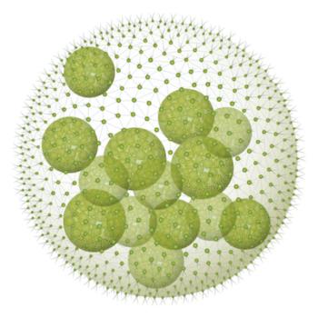Micro Alghe